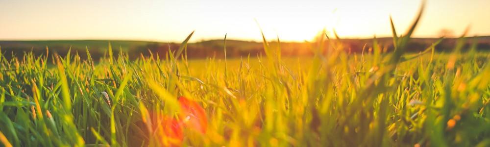 picjumbo.com_HNCK5154